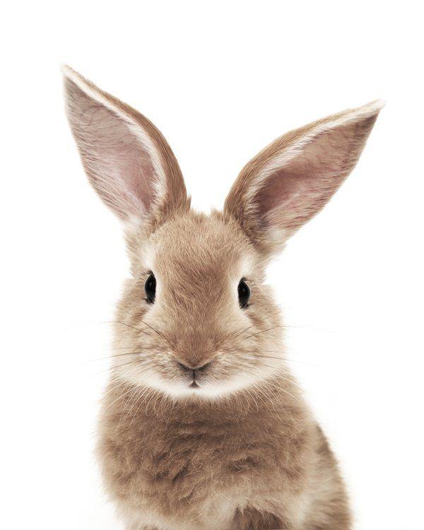 Photo of Bunny Acrylic Tray by Jean Holland – Baby Animals – Medium 15 1/2″ x 12″