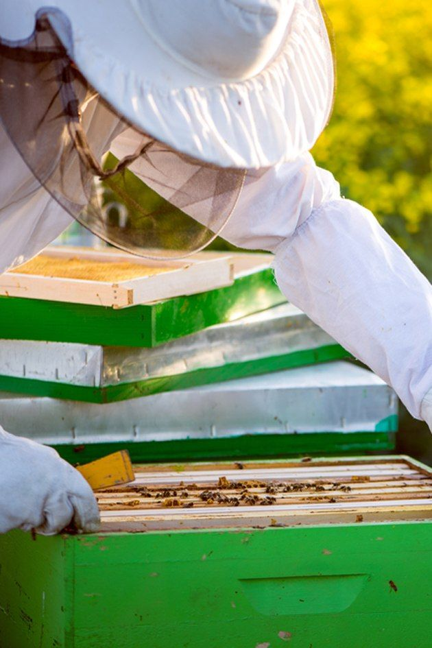 How to Beekeeping For Beginners: Langstroth vs. Top Bar ...