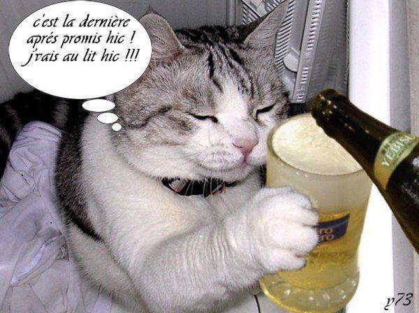 chat drole images marrantes avec des chats pinterest chats dr les chats et dr le. Black Bedroom Furniture Sets. Home Design Ideas