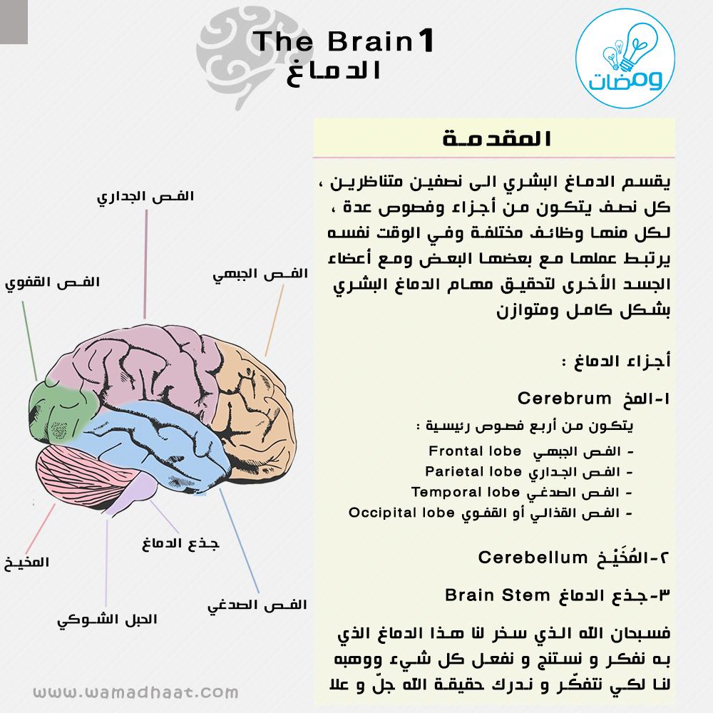 وها قد بدأنا بسلسلة الدماغ اعرف أكثر عن دماغك المصدر كتاب التشريح Netter Atlas Of Anatomy Anas H S Al De Words Lol Word Search Puzzle