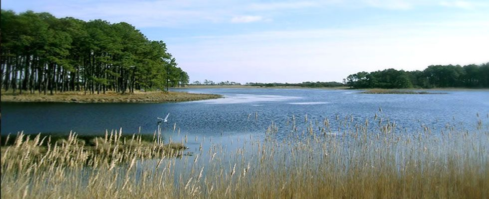 chincoteague island pictures - Google Search   Virginia