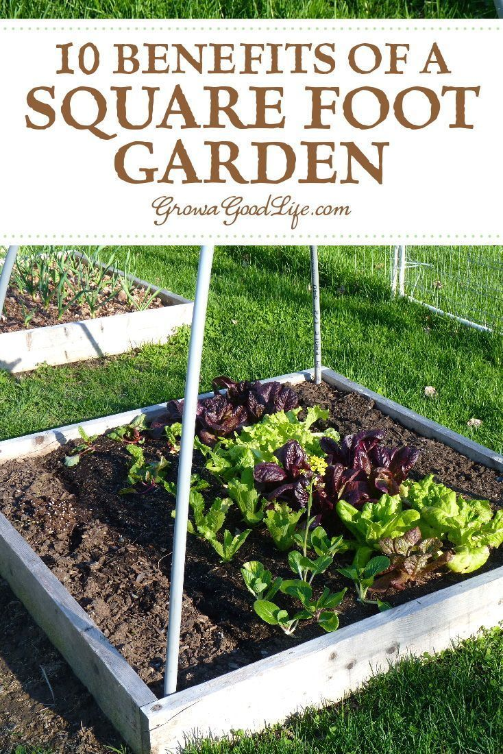 10 Benefits Of A Square Foot Garden Vegetable Garden Planner Vegetable Garden For Beginners Organic Gardening Tips