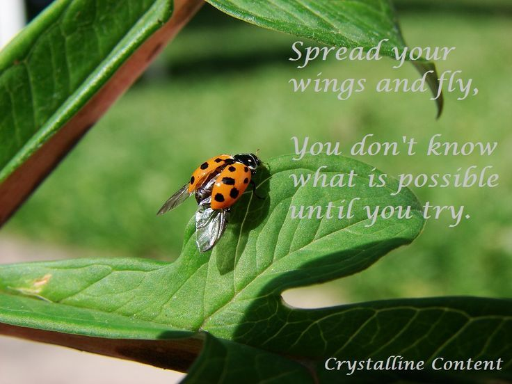 Inspirational Quotes Ladybug | Ladybug crafts | Ladybug quotes
