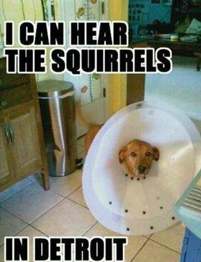 These Pets Are Making The Most Of Their Cones Funny Animal Pictures Funnyfoto Funny Animals Funny Animal Pictures Funny Dog Pictures
