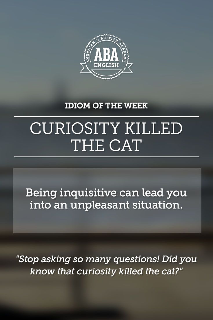 English Idiom Curiosity Killed The Cat Means That Being Inquisitive Can Lead You Into An Unpleasant Situation Learn English English Idioms English Phrases