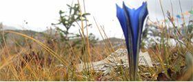 rester résilient comme une fleur qui pousse entre les craques du béton...Un défi noble!  L'article ici: http://www.alohayoga.ca/aloha/i.php?p=home=f=3_3_0_10