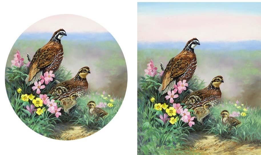 Best Pin By Ann Wieber On Birds Pheasants Quail Partridge 400 x 300