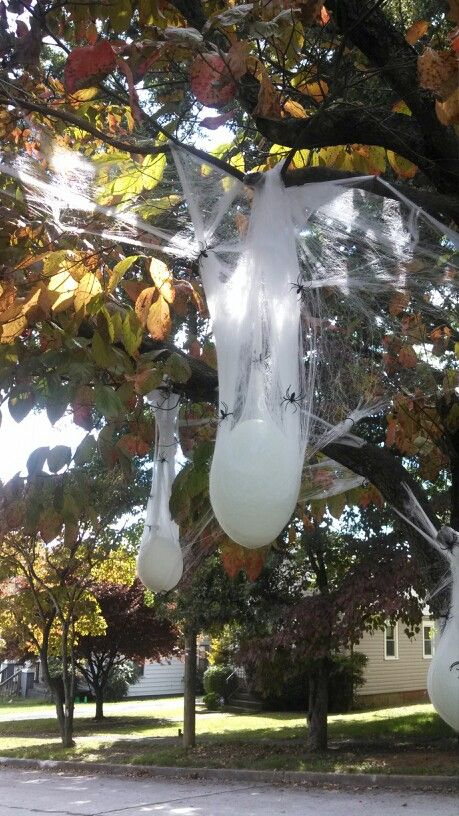 Spider egg sacks, water filled balloons, fake spiders  webbing - spider web decoration for halloween