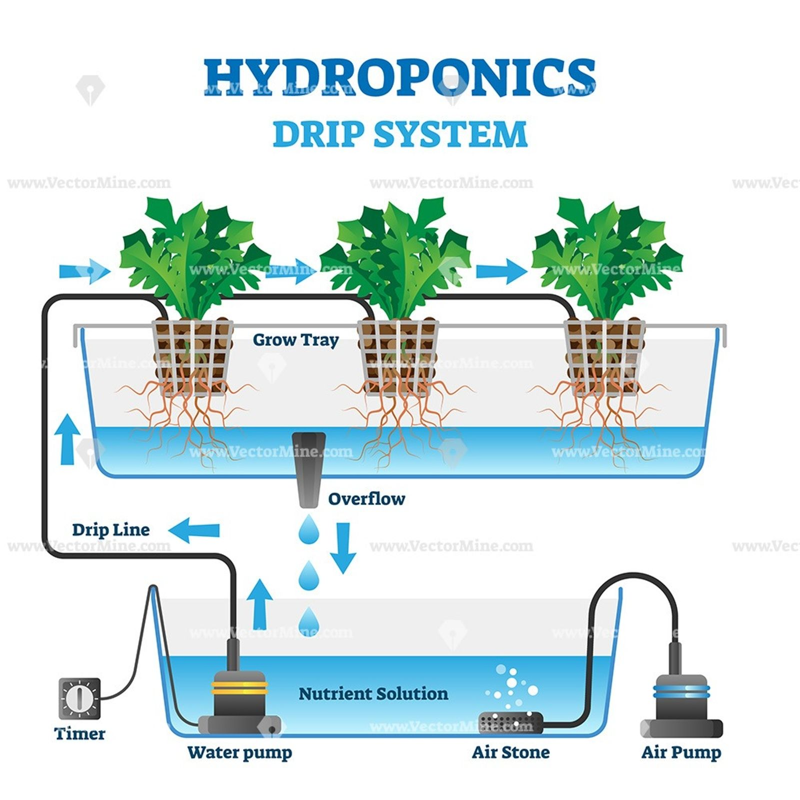 Hydroponics Vector Illustration In
