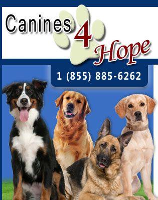 Contact Stuart Fl Dog Trainers Canines 4 Hope Palm City Fl Dog