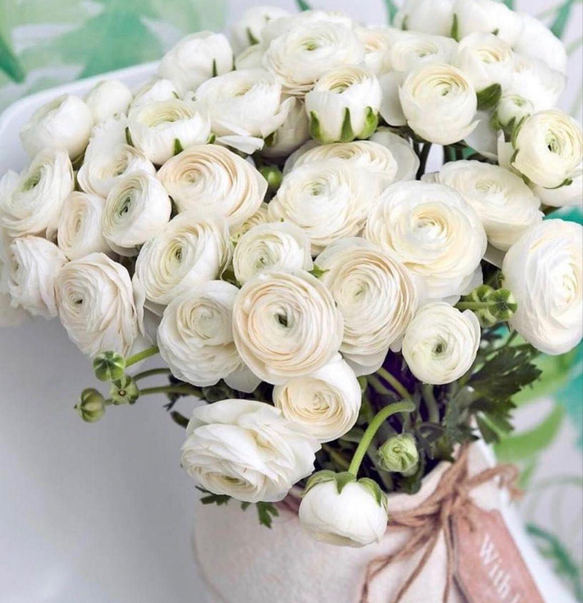 Wholesale White Ranunculus Flower In Bulk For Wedding More In 2020 White Ranunculus Online Wedding Flowers Flowers