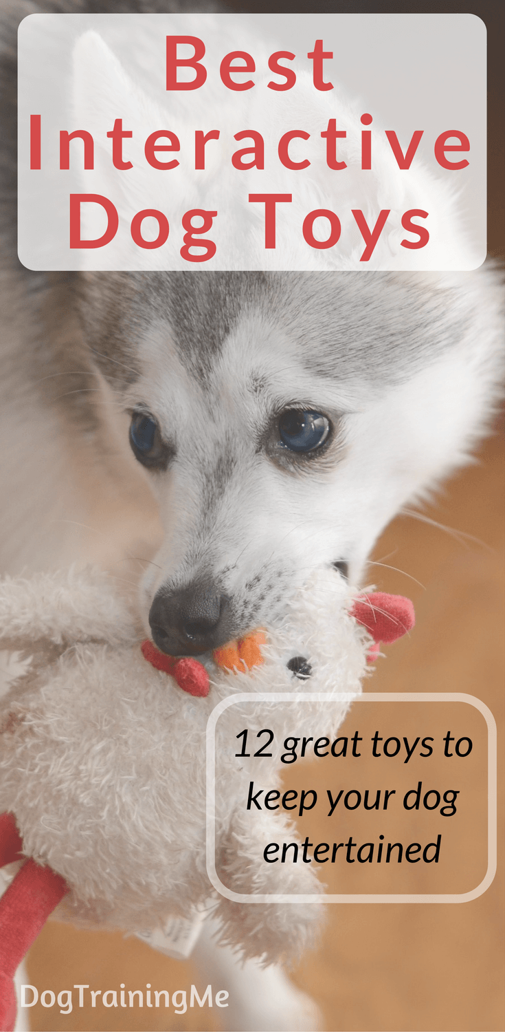 The Best Interactive Dog Toys to Keep Your Dog Entertained | Toy ... | Dog Toys To Keep Them Busy