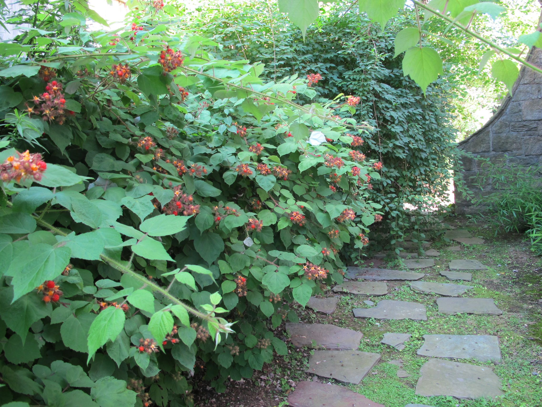 Inspiration for my ragged raspberry plants | Plants, Garden