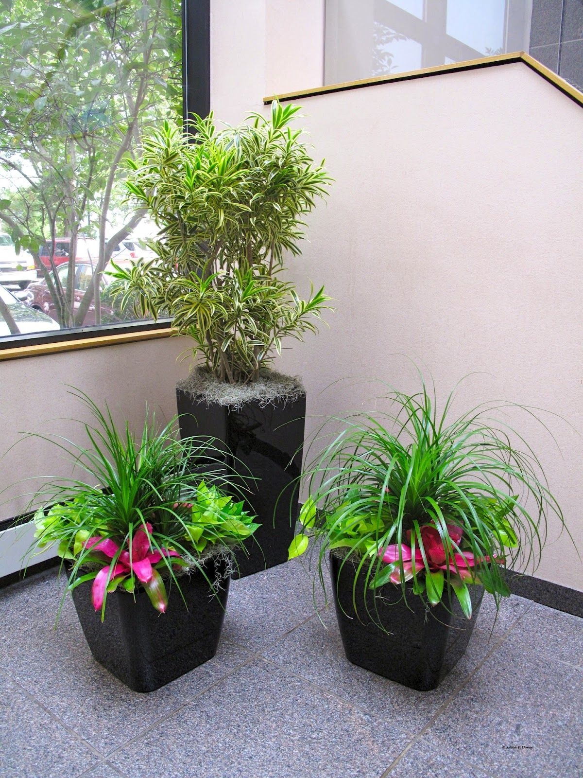 Potted Plant Ideas For Patio