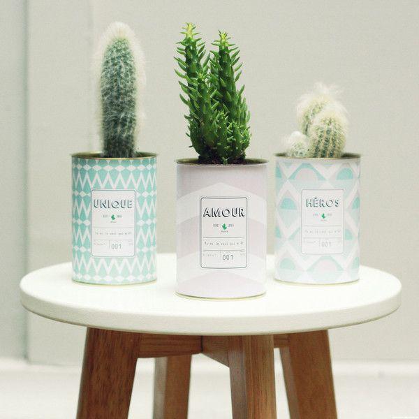 Pot Fleurs Plantes Cactus Tropiques Tropical Decoration Loft