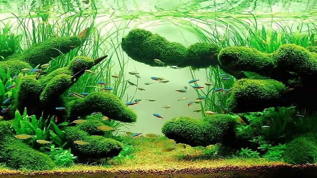 Aquascaping for Beginners: Getting the basics right ...