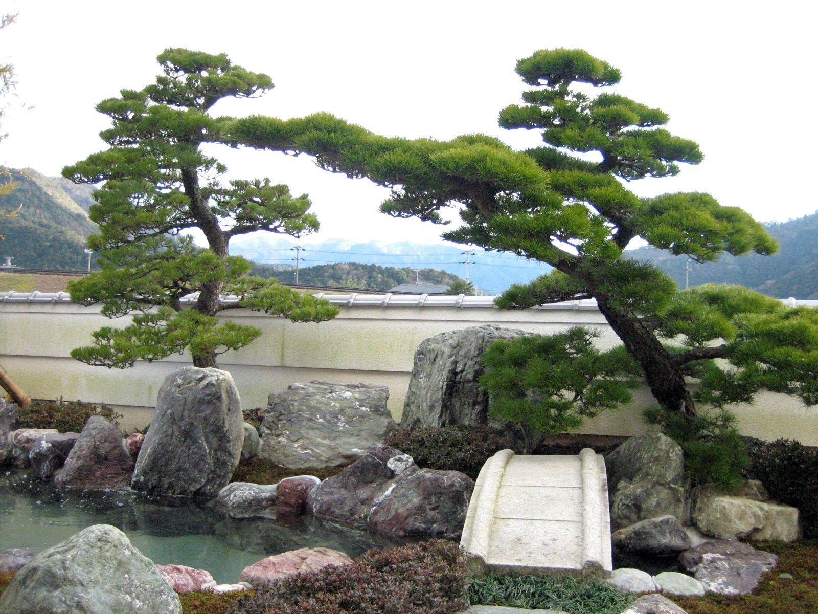 Beautiful bonsai pinterest - Balkongarten anlegen ...