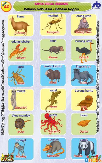 Kamus Visual Binatang Dua Bahasa Indonesia Inggris 7 Bahasa Binatang Indonesia