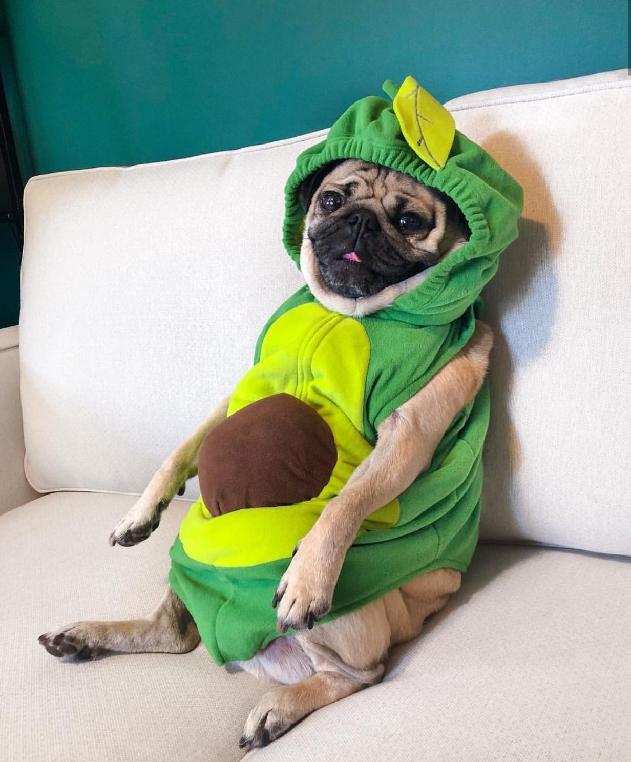 Pin By Candice May Martin On Green Verde Doug The Pug Pugs