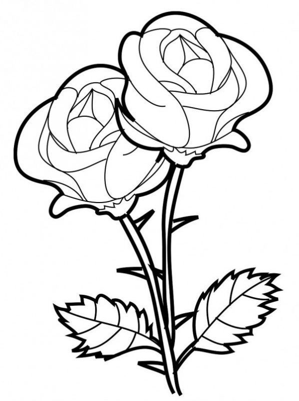 Dibujos De Plantas Ornamentales Para Colorear Dibujo De Rosa Facil Dibujos De Rosas Flores Faciles De Dibujar