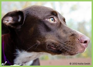 Adopt Lucy On Petfinder German Shorthaired Pointer Dog Dog Photos German Shorthaired Pointer