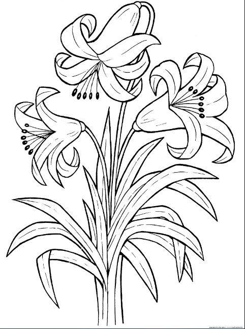 Mewarnai Gambar Bunga Bakung Dengan Gambar Bunga Lembar