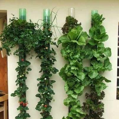 Plant tower using Recycled PET bottles! Vertical Gardening at its BEST