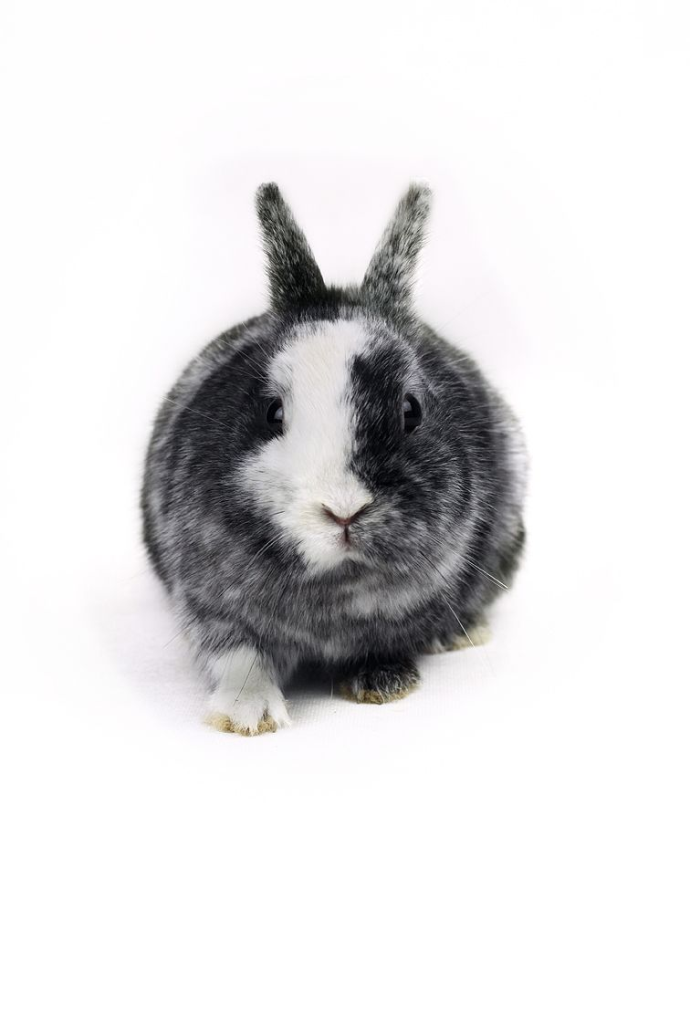 Pin by jules on como no adorarlos pinterest bunny rabbit and