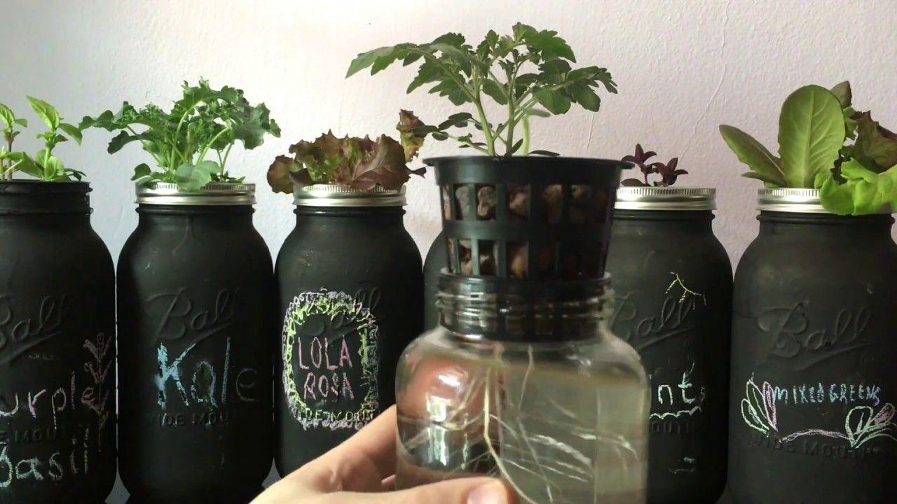 Easy DIY Beginner Hydroponic Kratky System hydroponics