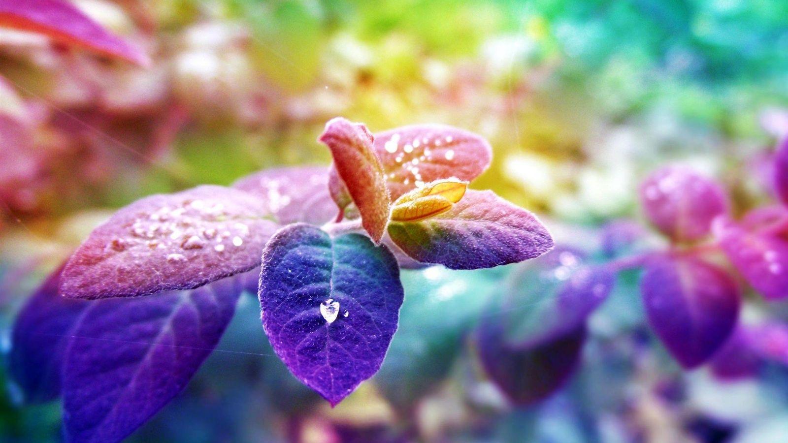 Feuilles Bleu Violet La Rosee Du Matin Fonds D Ecran 1600x900 Fonds D Ecran De Telechargement Rosee Du Matin Fond Ecran Nature Feuille