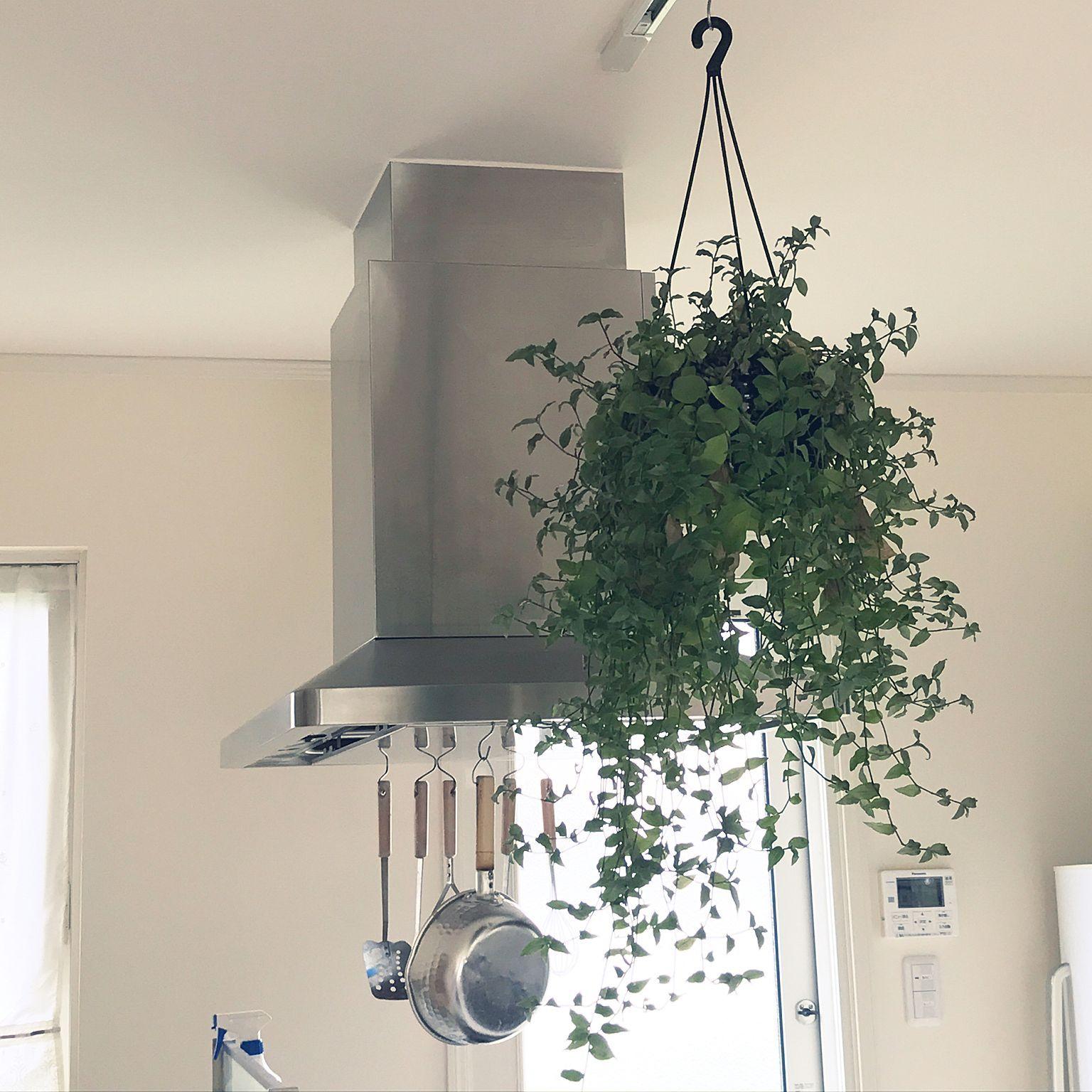 ダクトレール 観葉植物 キッチン キッチンのインテリア実例 2017 08