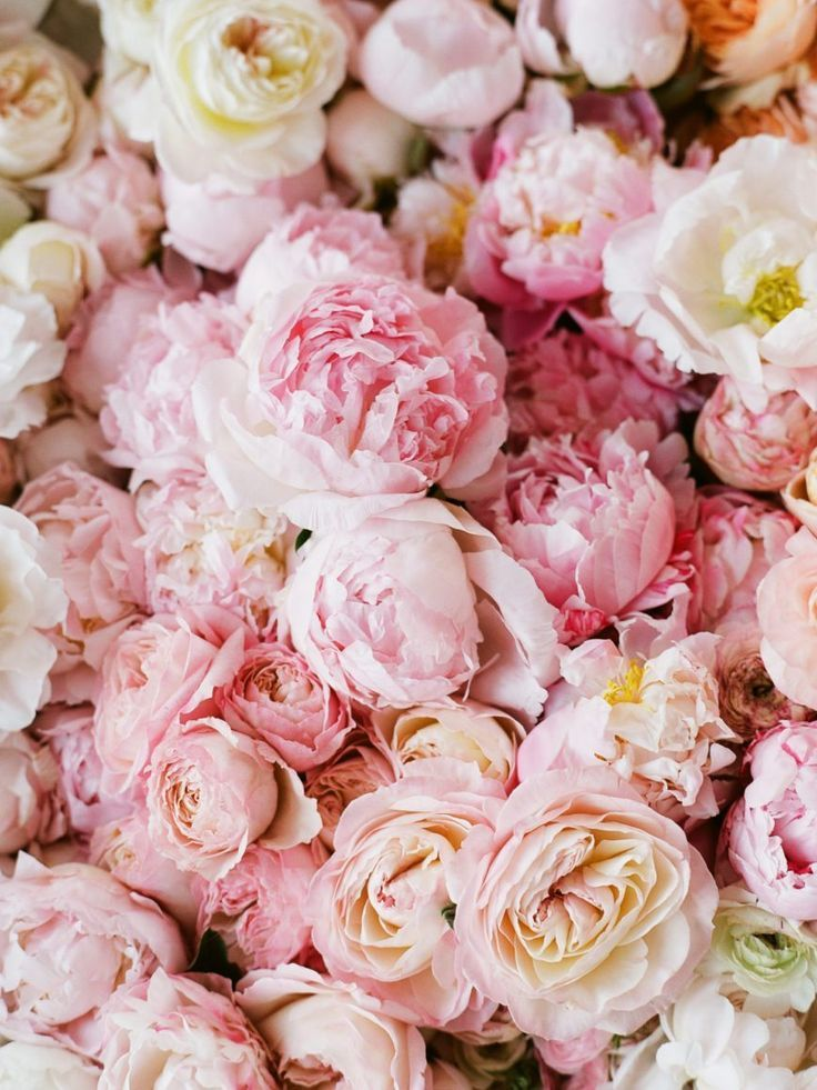 4 fleurs flowers peonies beautiful flowers rh pinterest com