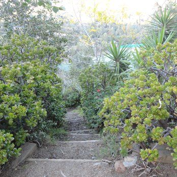 amirs garden stairs griffith park los angeles ca united states - Amirs Garden