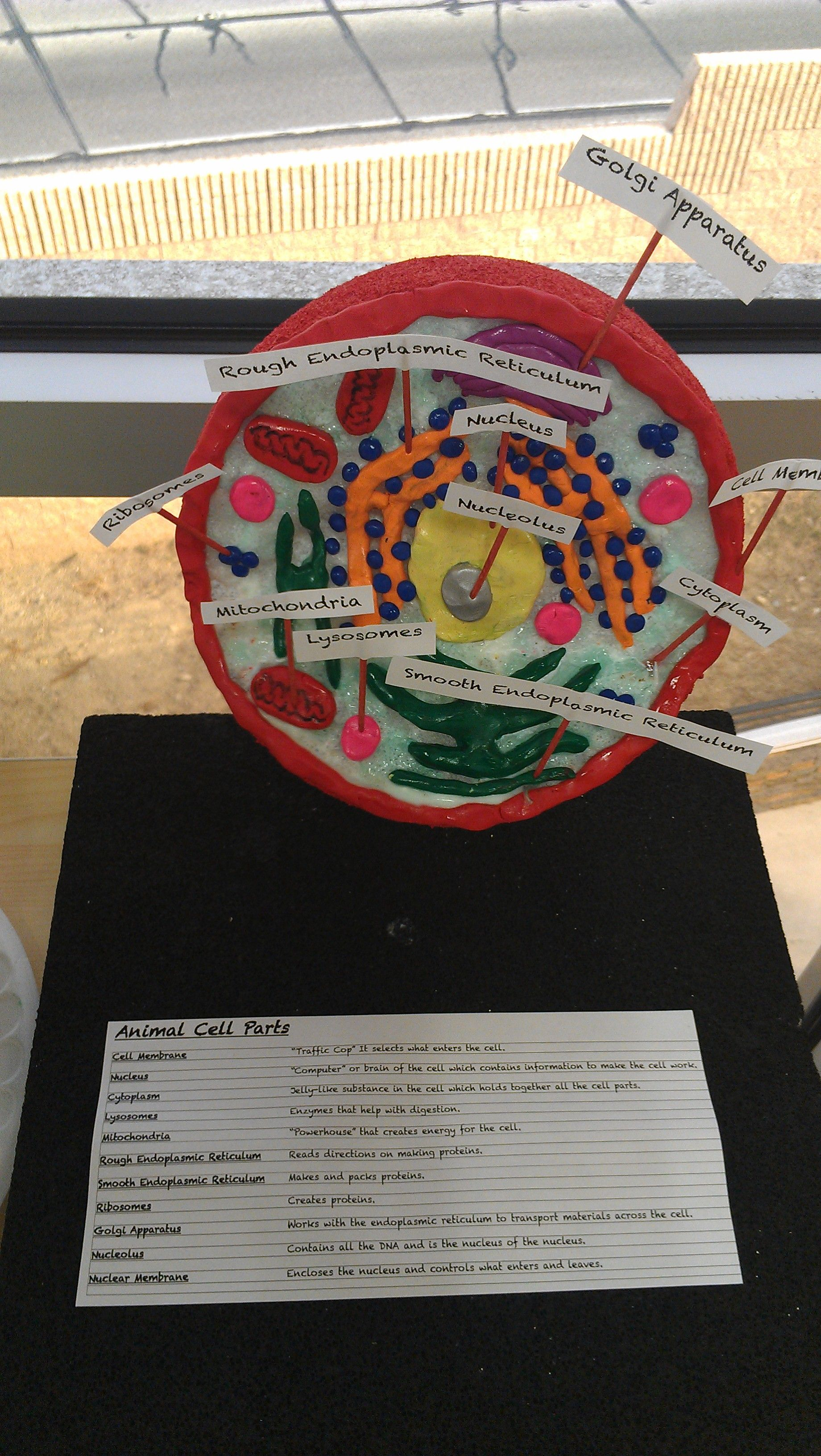 7th Grade Animal Cell Model by H.J. | Cells project ...