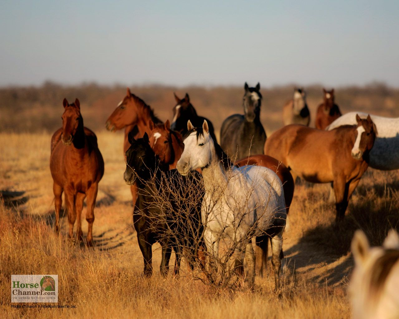 Western Horse Wallpaper For Android #P6m