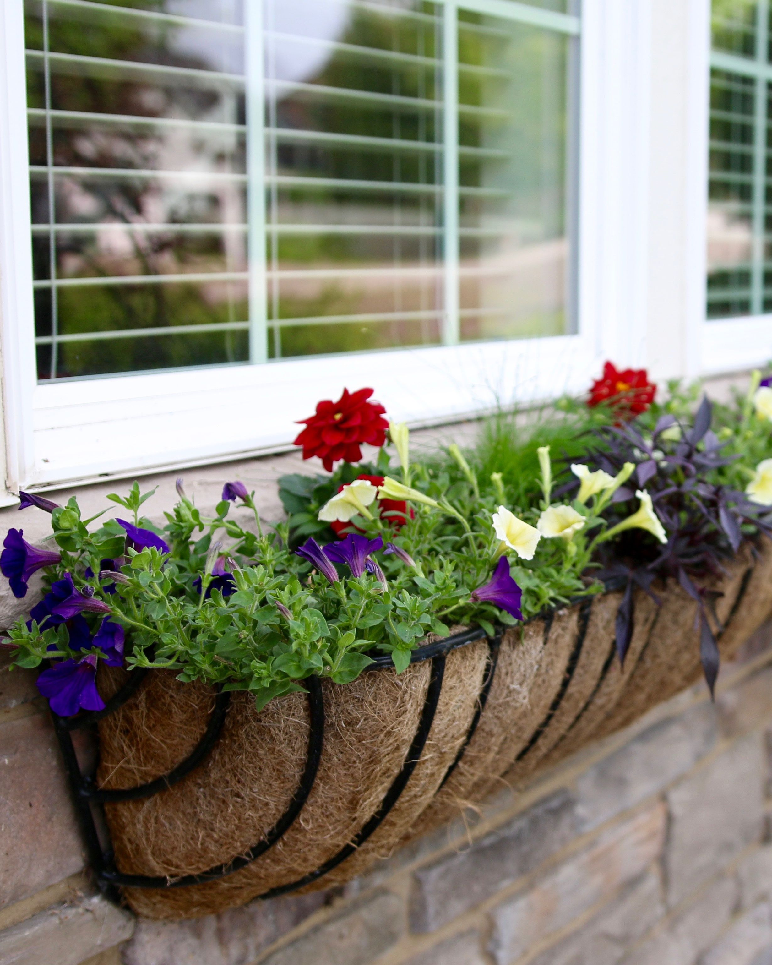 Plant Up A Spring Window Box To Enjoy All Summer