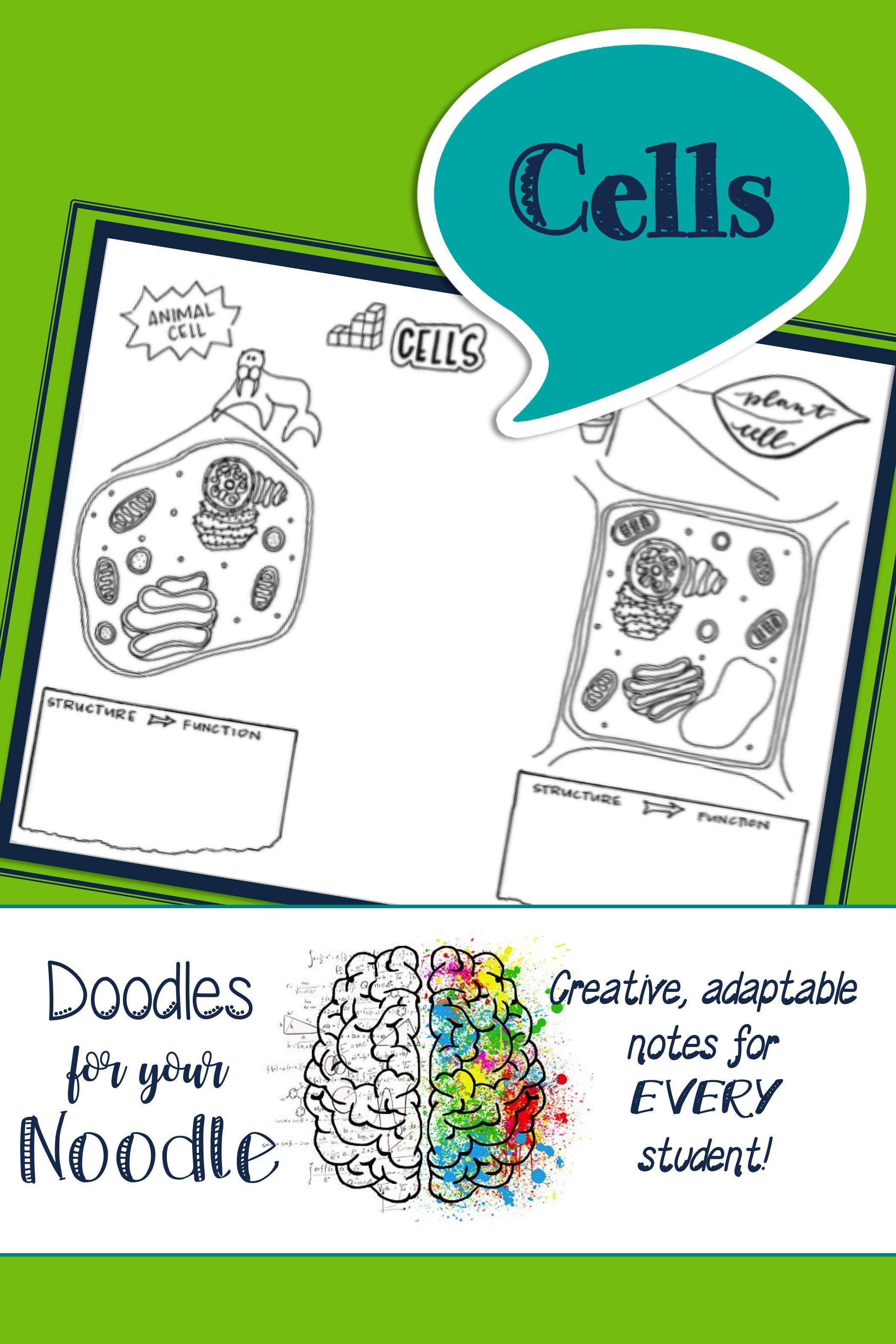 Doodles For Your Noodle Cells Doodle Notes Organelles Cell Organelles [ 3149 x 2099 Pixel ]