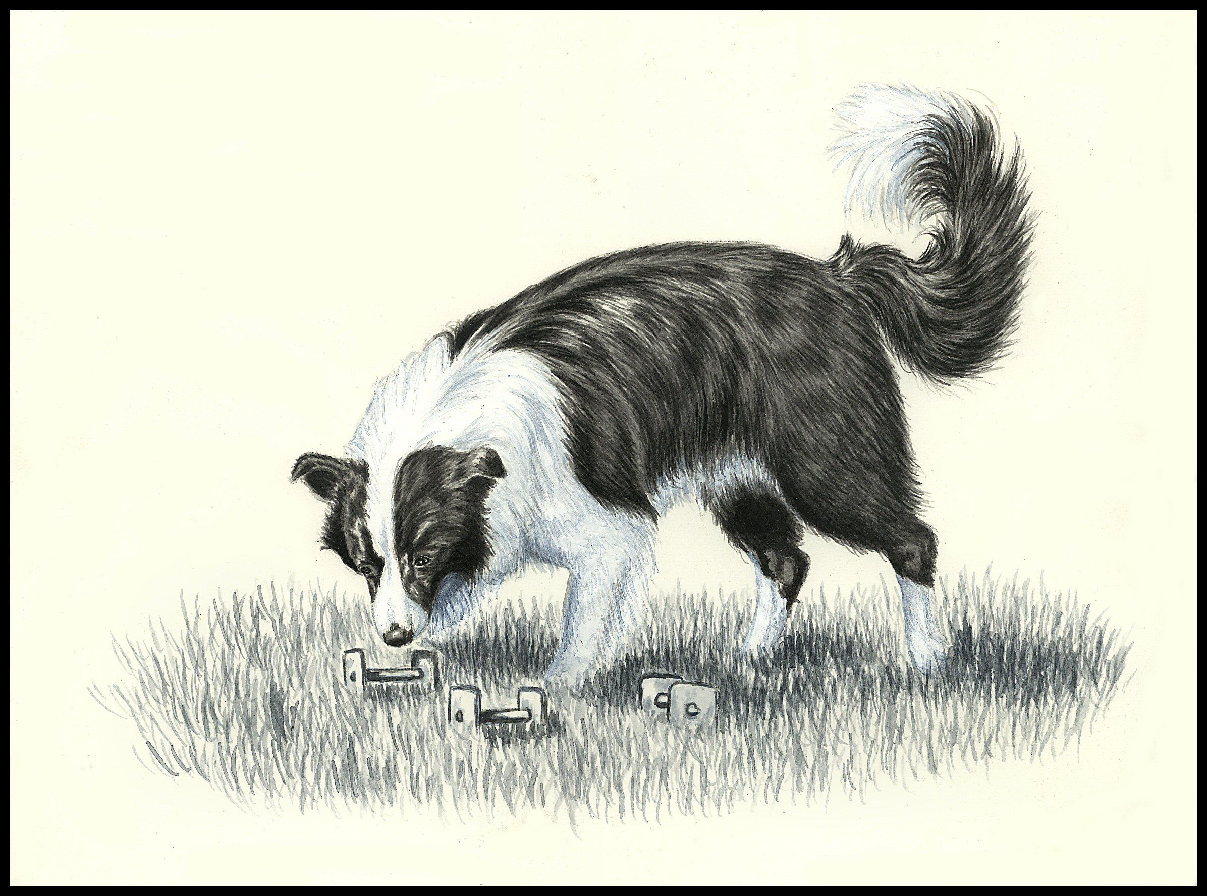 Free Border Collie Cartoons Coloring Pages