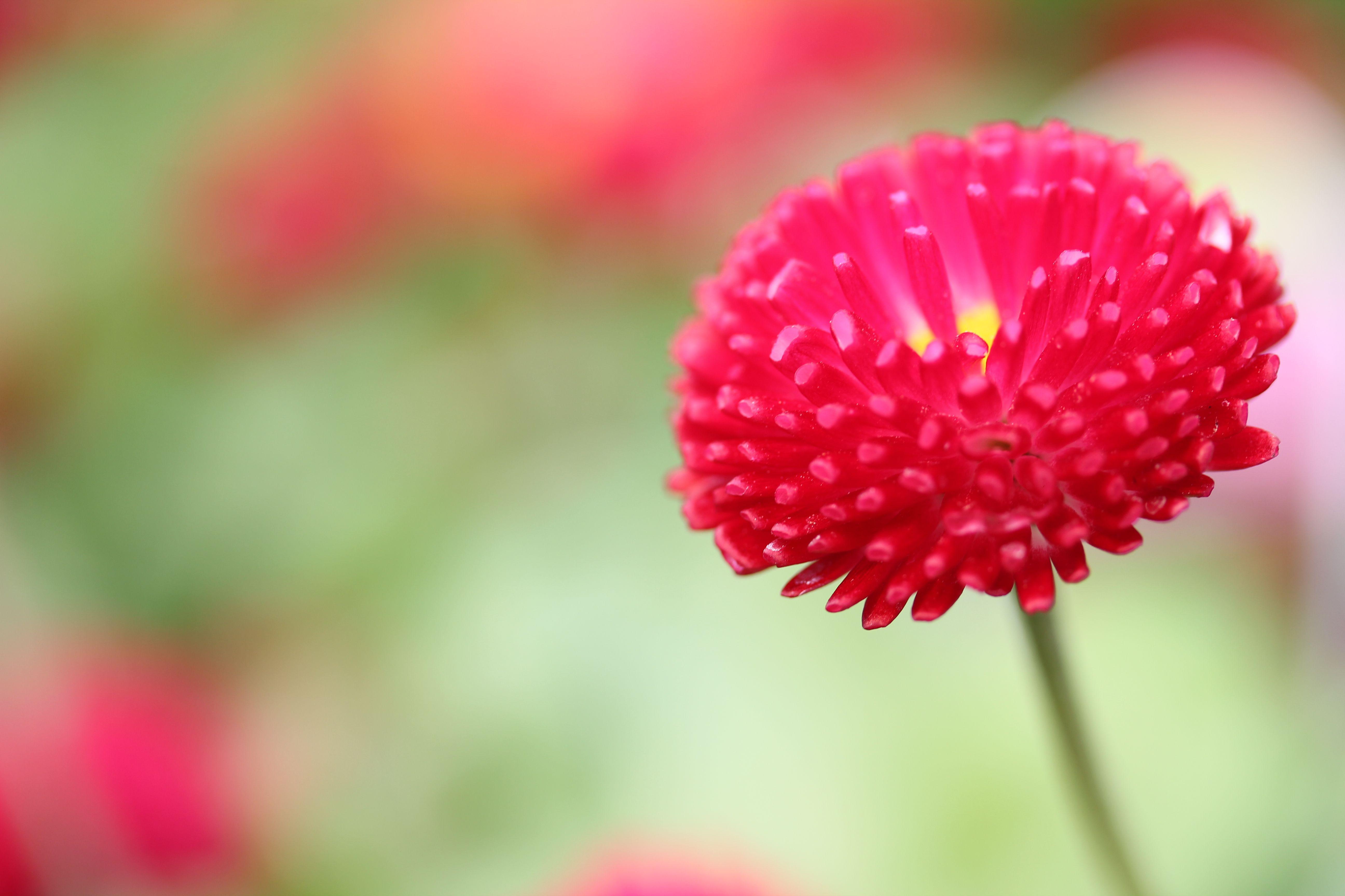 Lovely little red flower...........