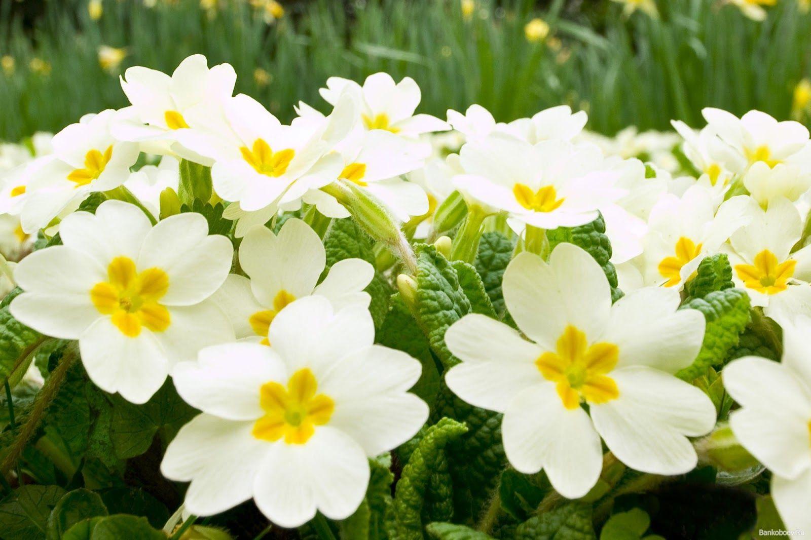 Imagenes De Flores Blancas Hermosas Para Computadora Colage Cuadro