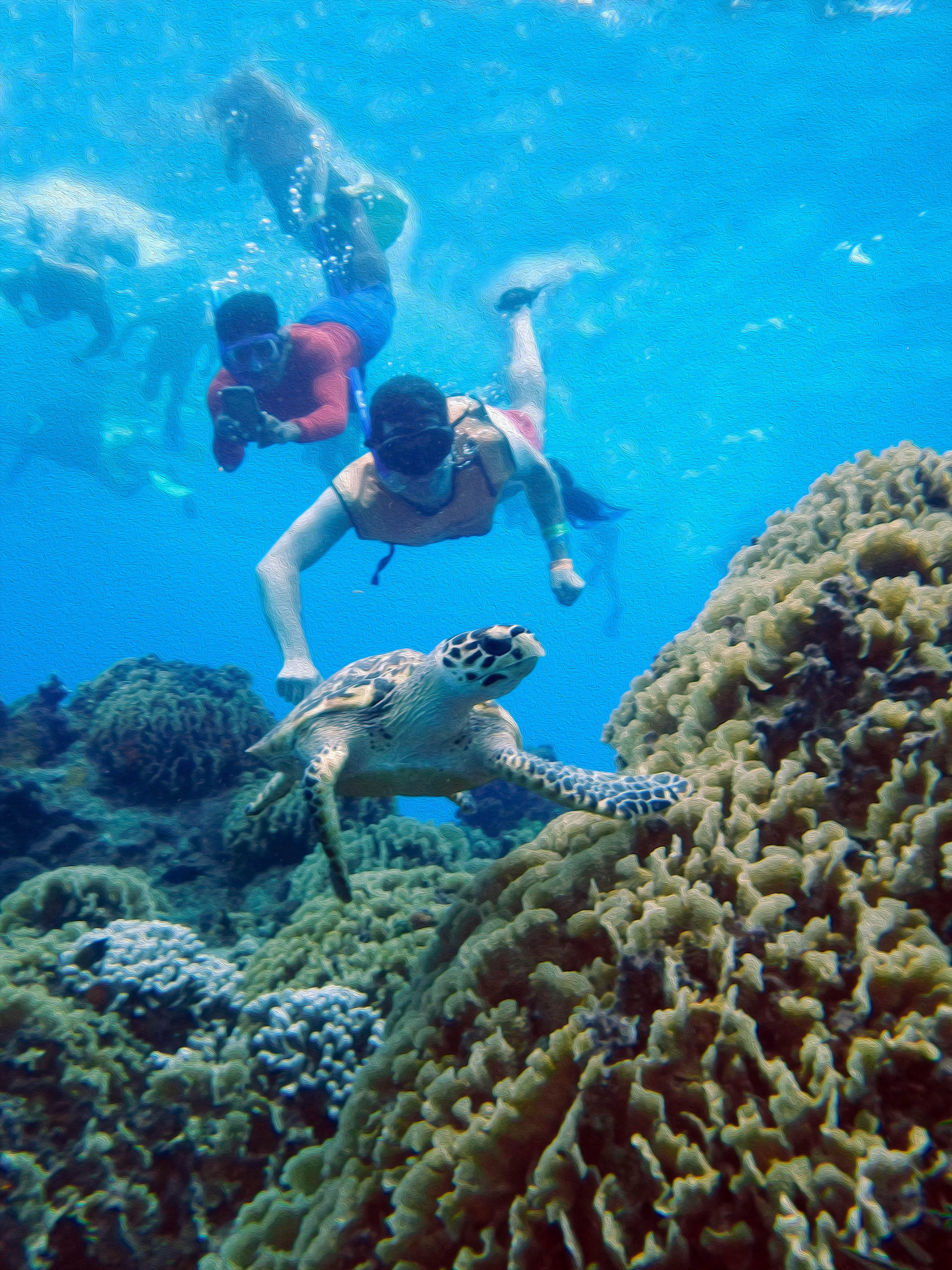 Las Vegas Excursions >> Cozumel Reef Snorkel The second largest barrier reef in the world. www.cancunadventour.com ...