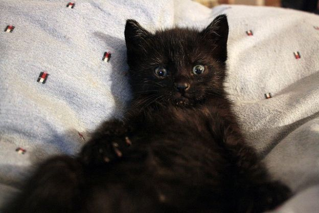 black cats pictures 10