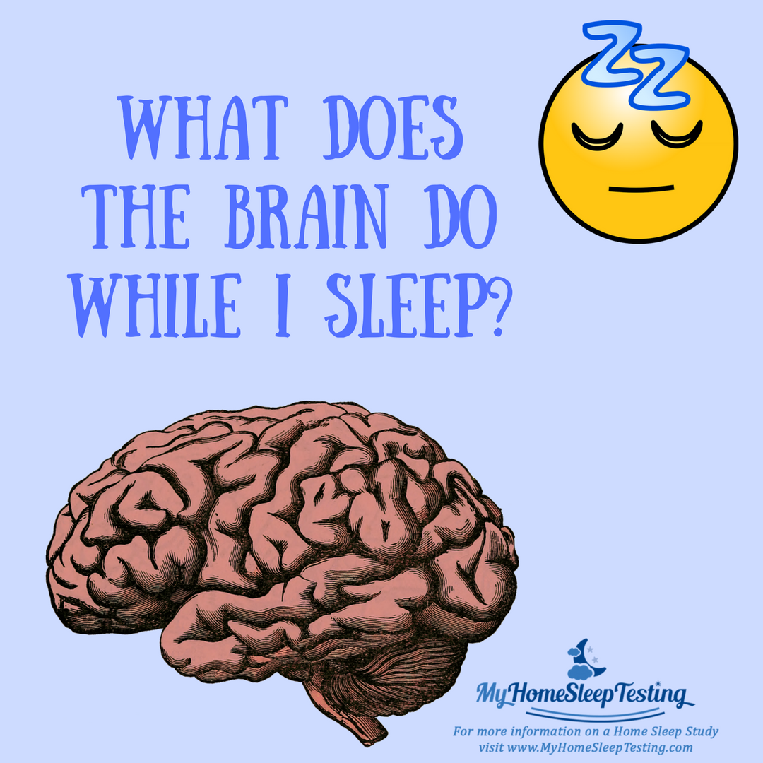 During Sleep The Brain Consolidates Memories And Skills Meaning