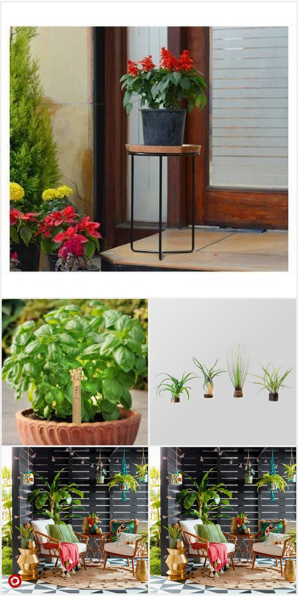 Shop Target for plant you will love at great low prices