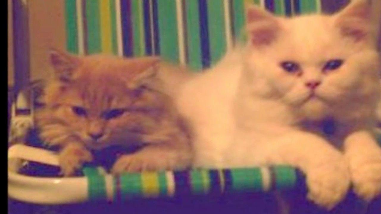 Gatitos De Nuestro Criadero En Su Nuevo Hogar Gatos Animales Y