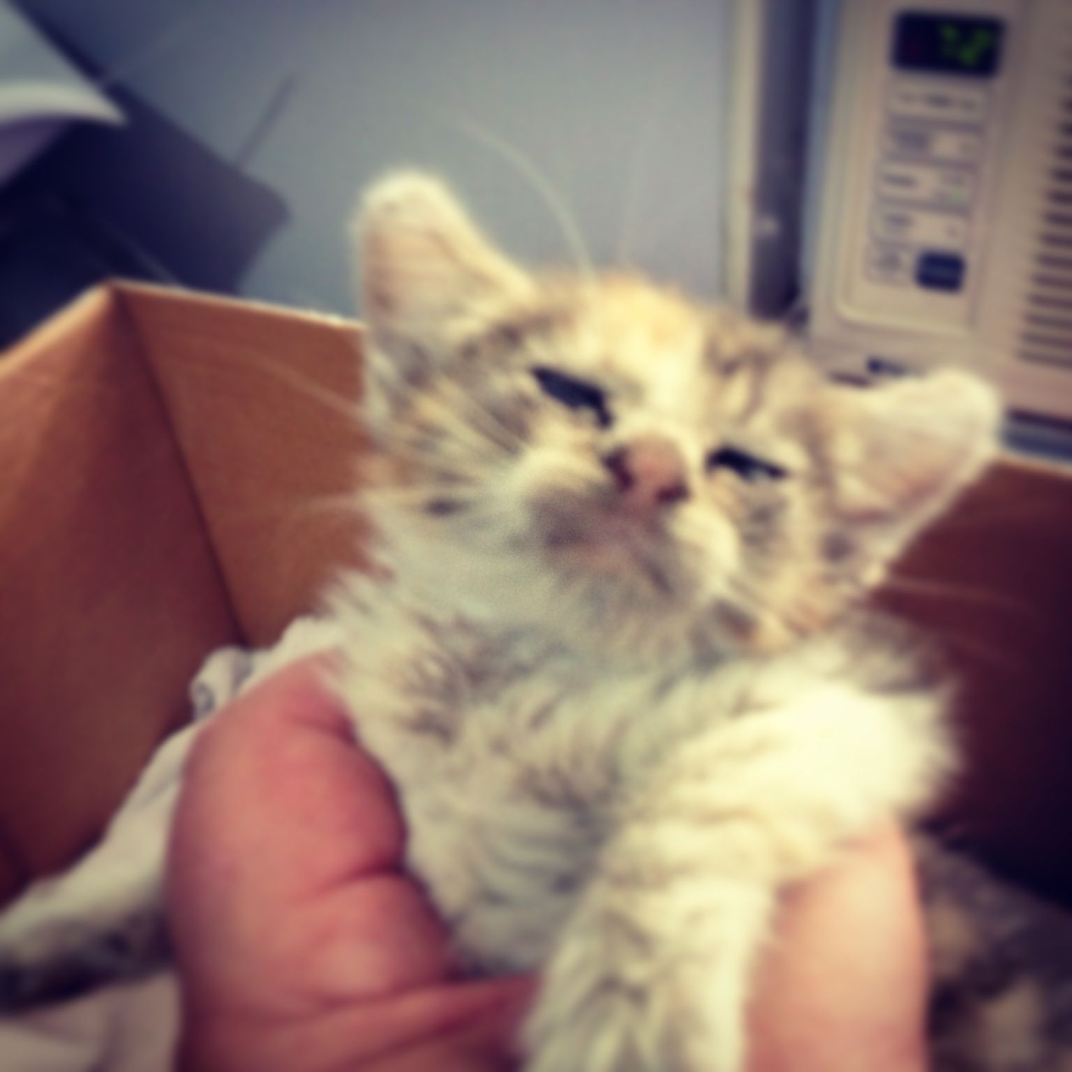 Poor Kitten Malnourished Covered In Fleas Anemic And Dehydrated We Ll Do What We Can To Save Her Life Off To The Er Vet Animal League Malnourished Kitten