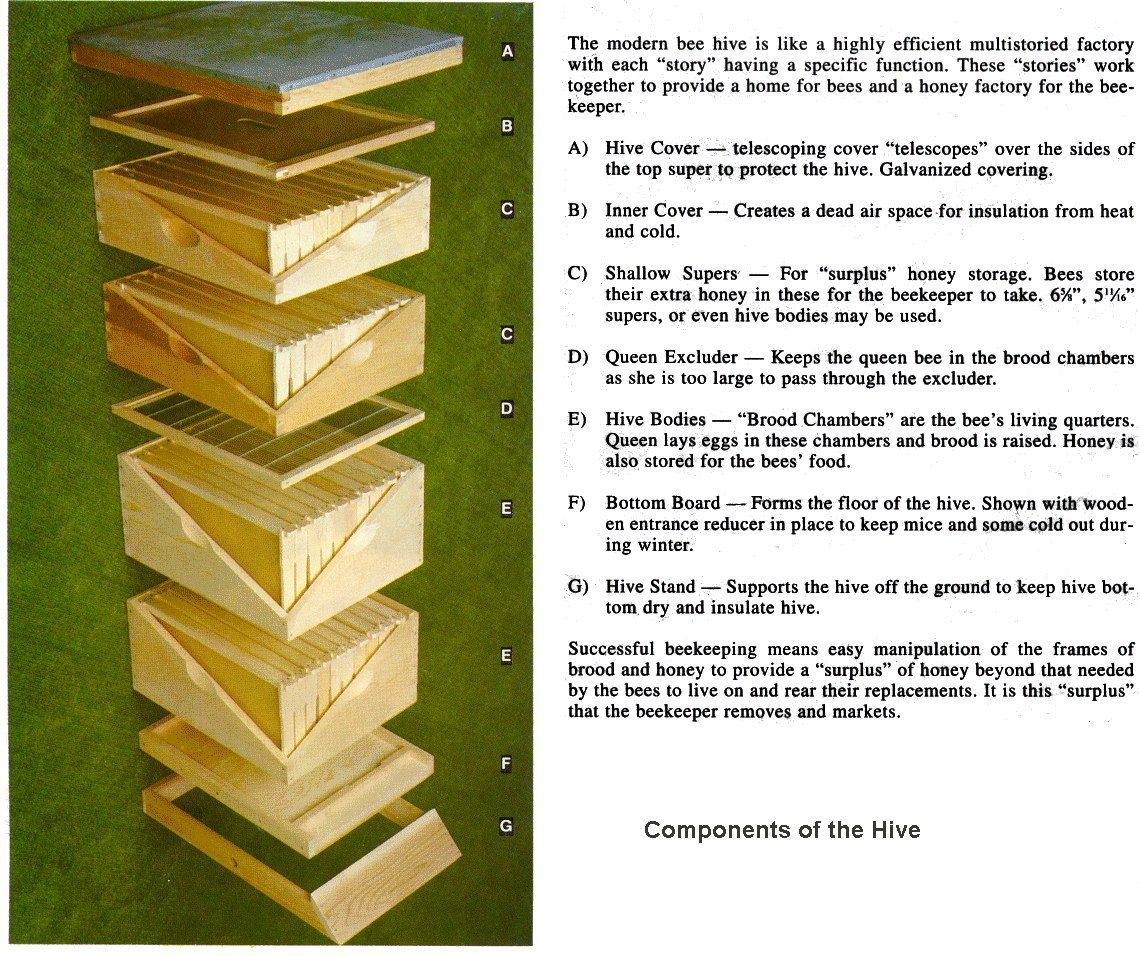 Diagram Of A Queen Bee All Vehicle Wiring Diagrams How To Put Together Hive Hives Pinterest