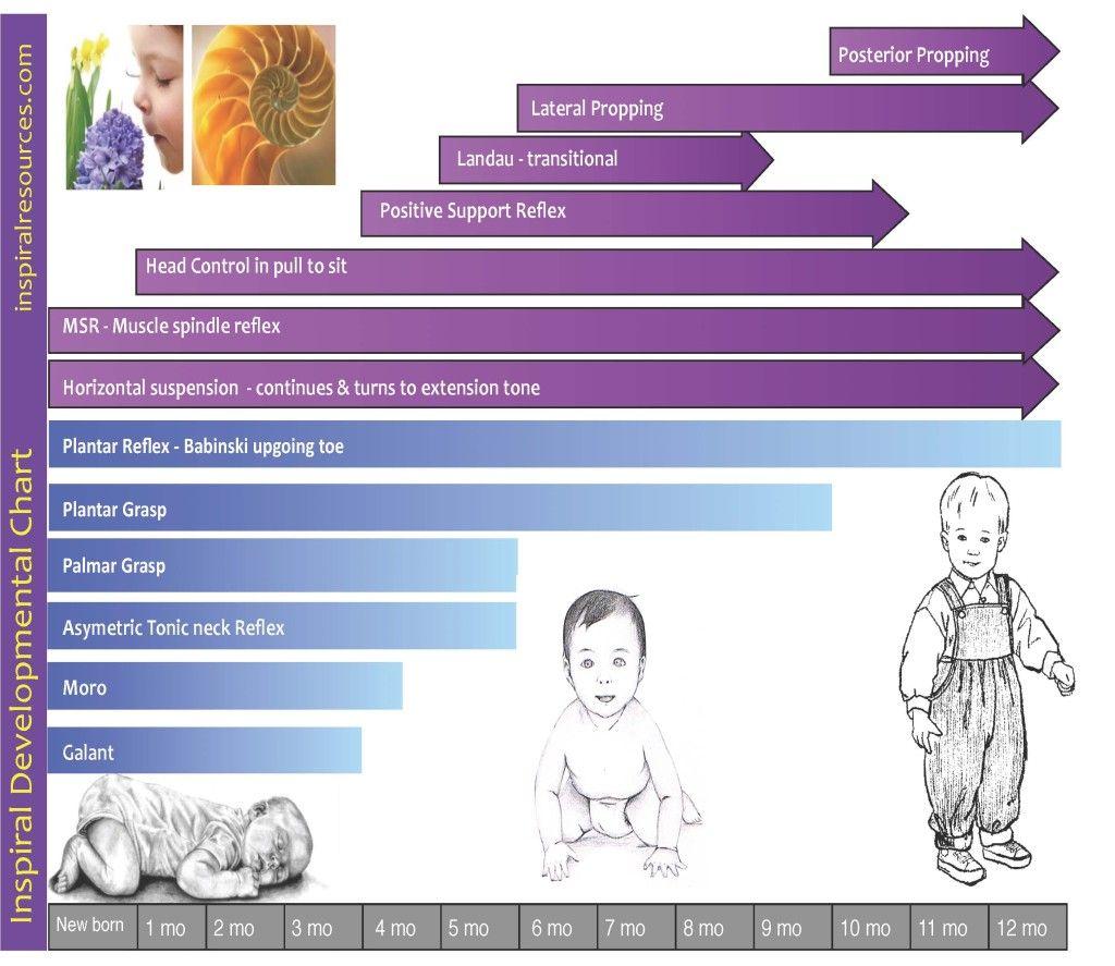 Inspiral Reflex Chart Health Care Services Reflexes Primitive Reflexes