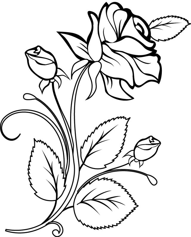Coloriage une rose et des boutons de rose dory coloriages all holidays pinterest rose - Dessin de rosier ...