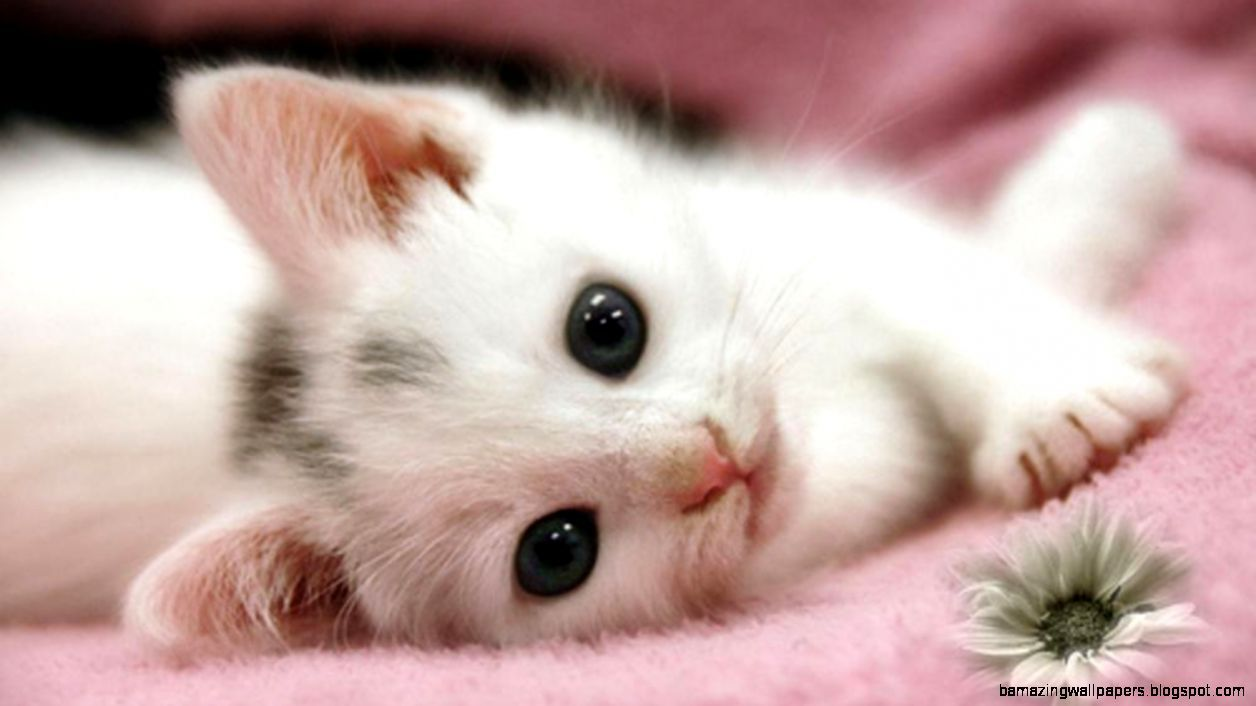 Cute Baby Puppies And Kittens Background 1 HD Wallpapers
